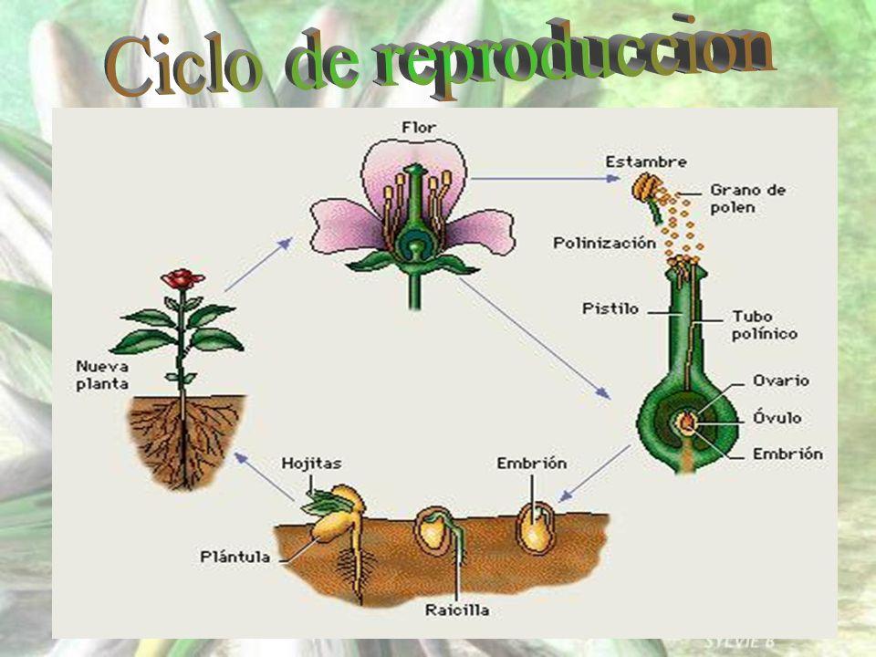 Ciclo de reproduccion