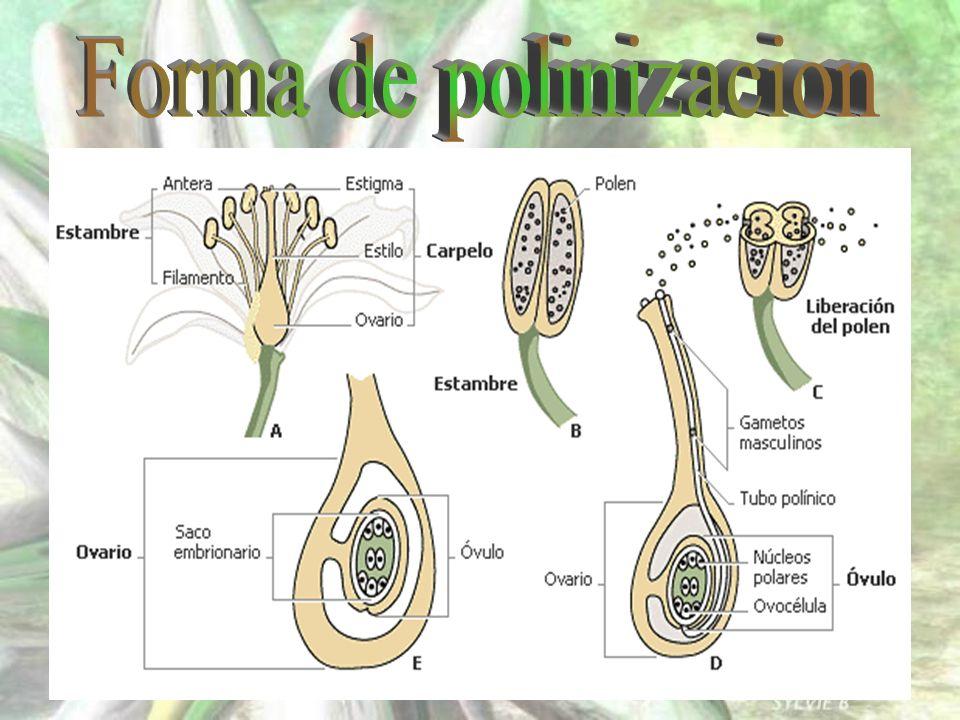 Forma de polinizacion