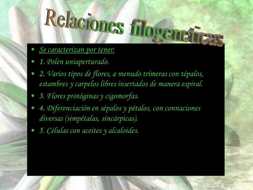 Relaciones filogeneticas