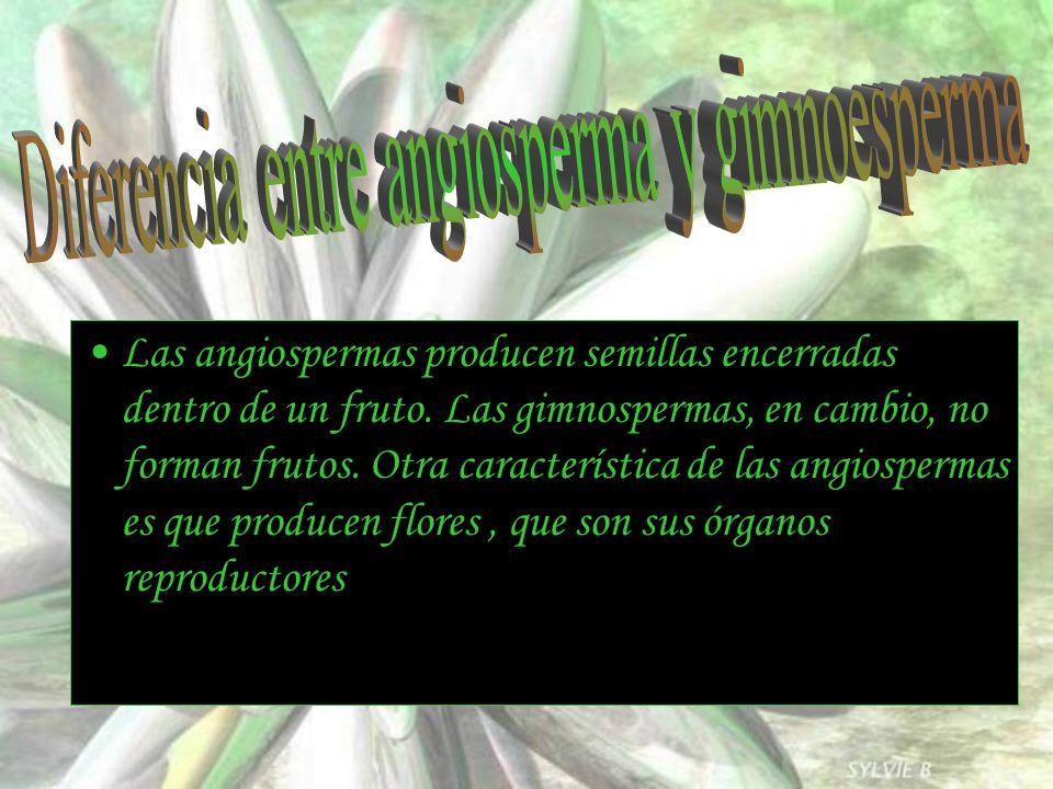 Diferencia entre angiosperma y gimnoesperma