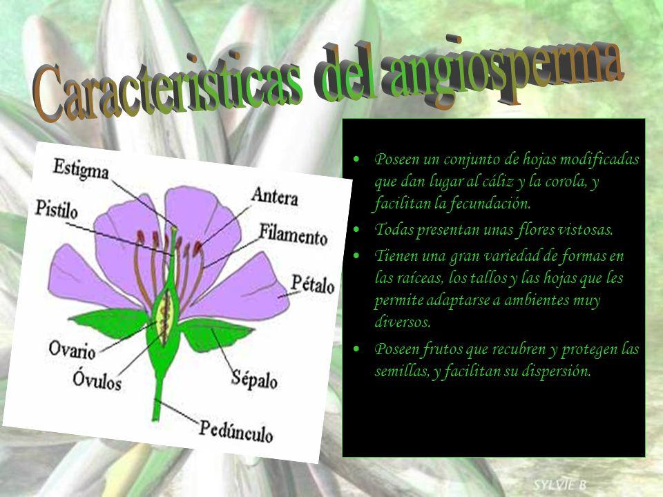 Caracteristicas del angiosperma