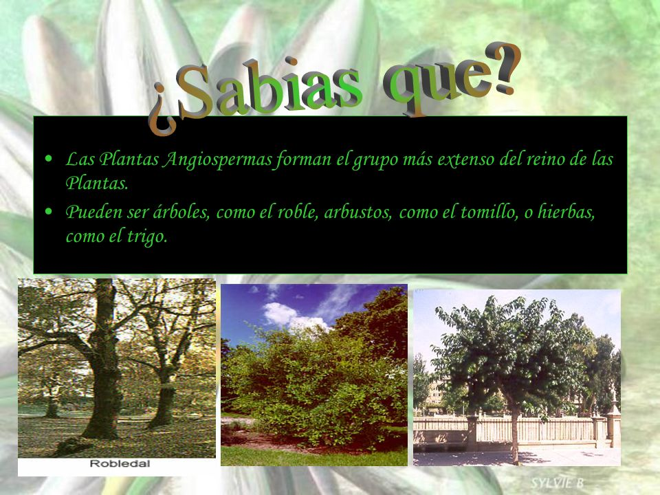 ¿Sabias que Las Plantas Angiospermas forman el grupo más extenso del reino de las Plantas.