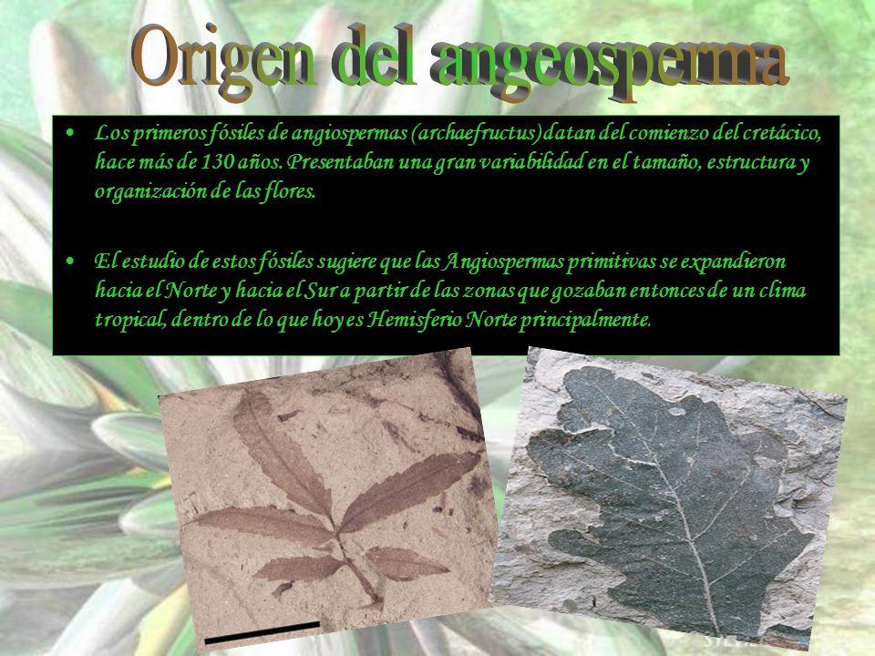 Origen del angeosperma