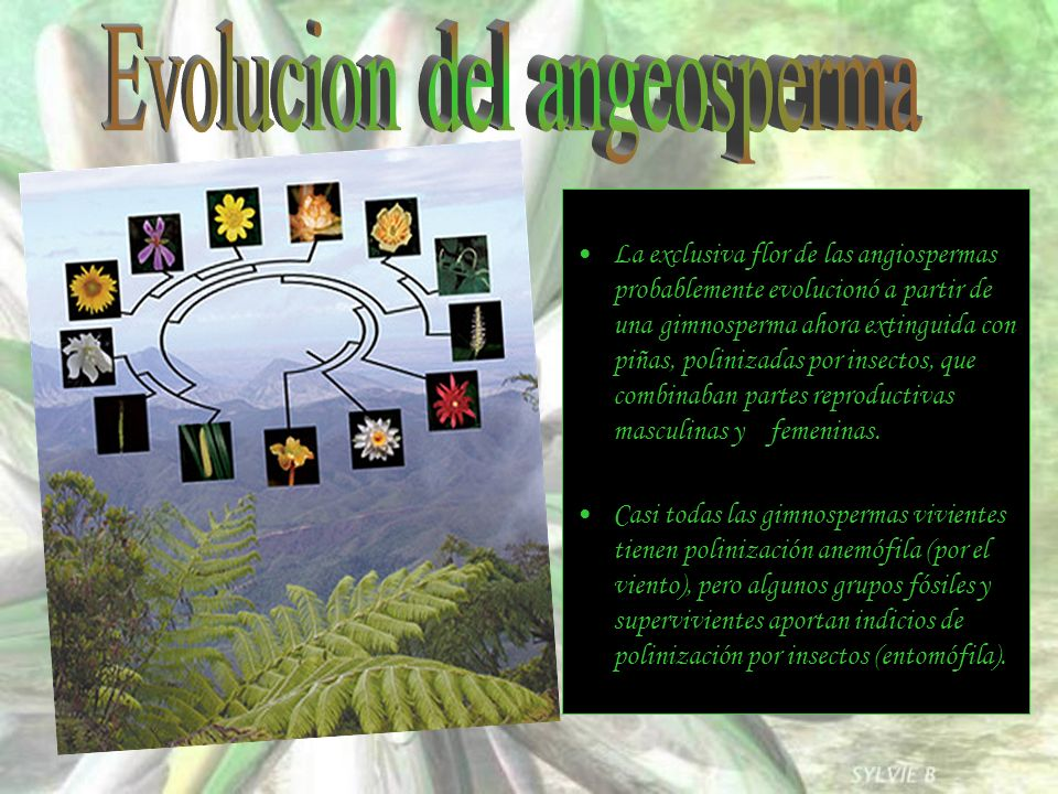Evolucion del angeosperma