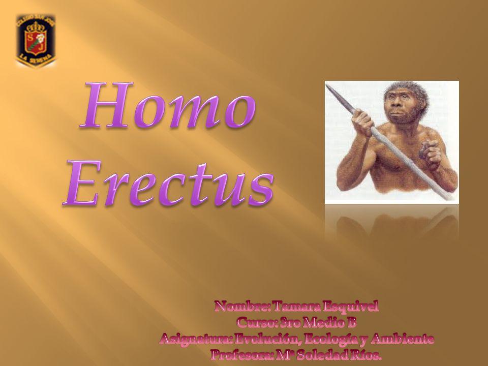 Homo Erectus Nombre: Tamara Esquivel Curso: 3ro Medio B Asignatura: Evolución, Ecología y Ambiente Profesora: Ma Soledad Ríos.