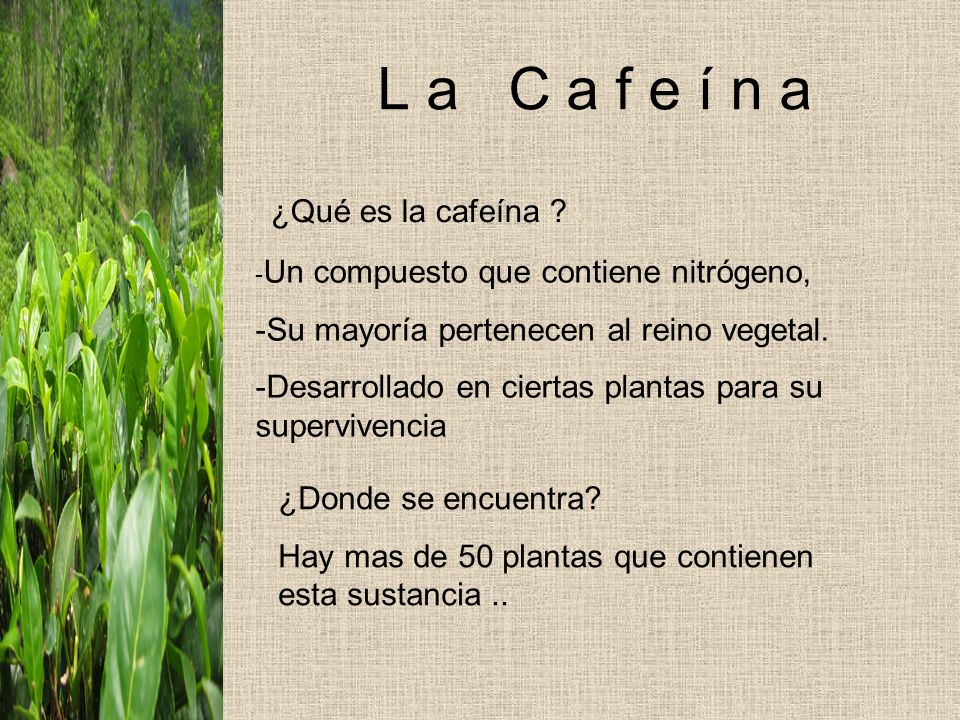 L a C a f e í n a ¿Qué es la cafeína