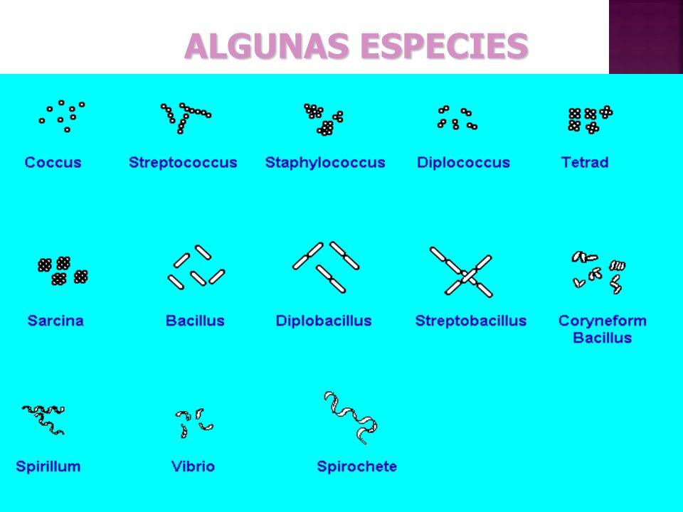 ALGUNAS ESPECIES