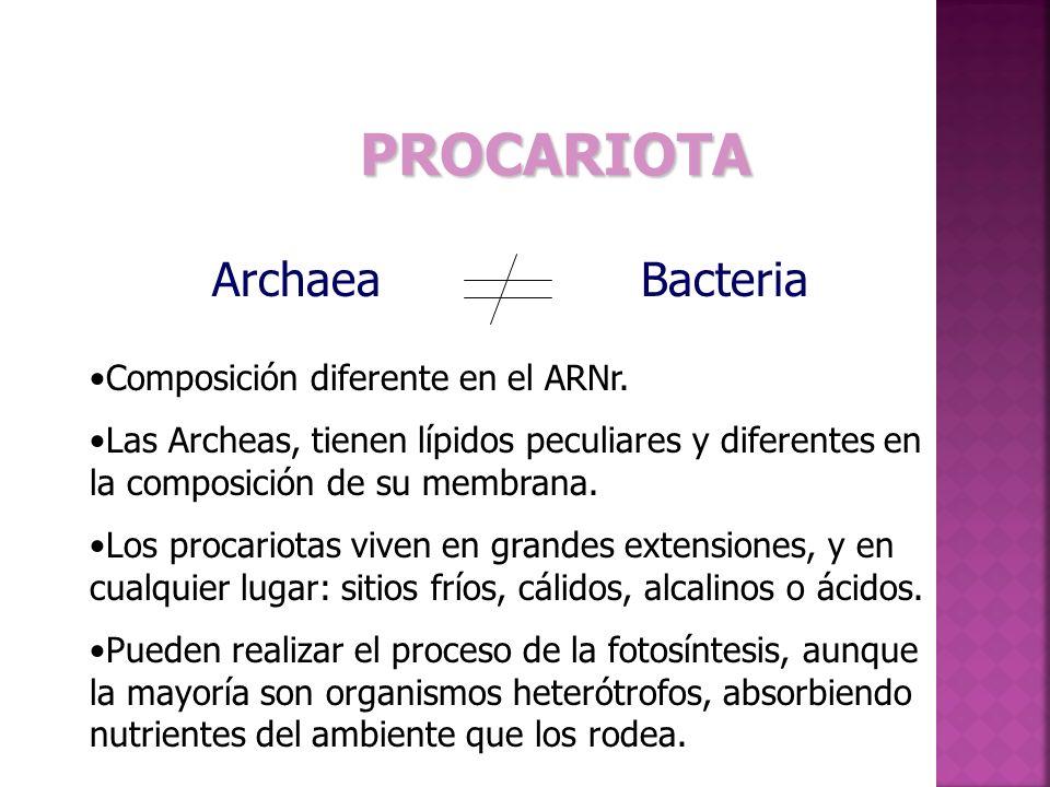PROCARIOTA Archaea Bacteria Composición diferente en el ARNr.