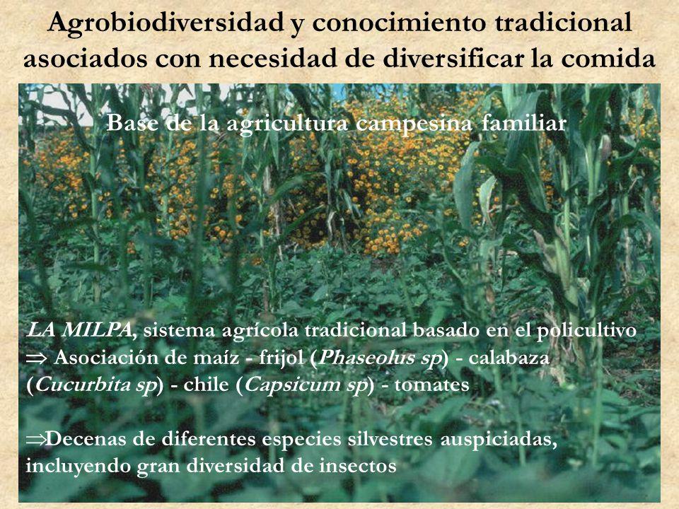 Agrobiodiversidad y conocimiento tradicional asociados con necesidad de diversificar la comida