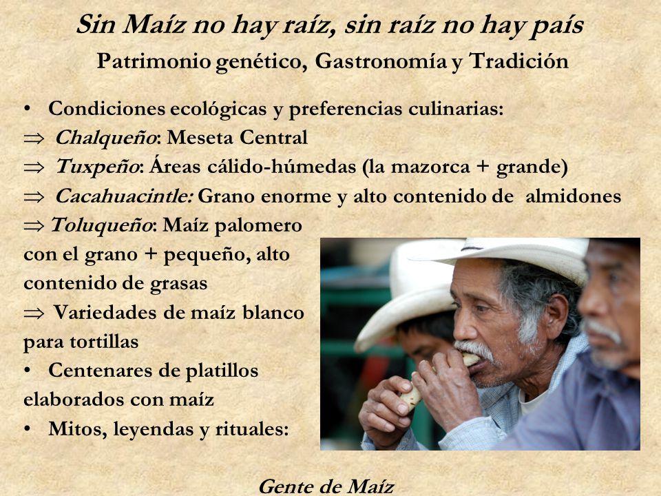 Sin Maíz no hay raíz, sin raíz no hay país Patrimonio genético, Gastronomía y Tradición