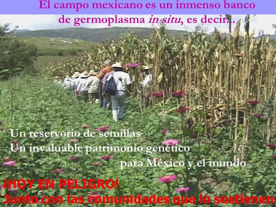 El campo mexicano es un inmenso banco
