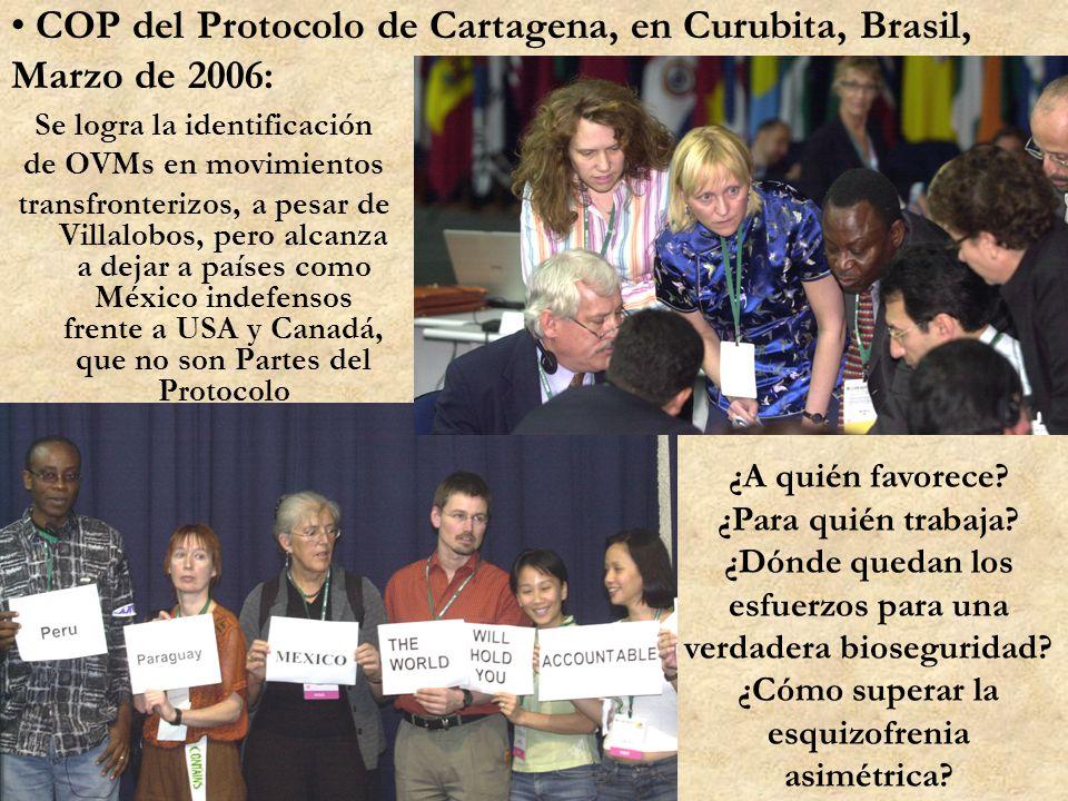 COP del Protocolo de Cartagena, en Curubita, Brasil, Marzo de 2006: