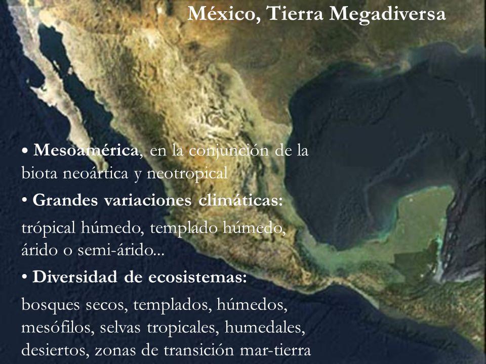 México, Tierra Megadiversa