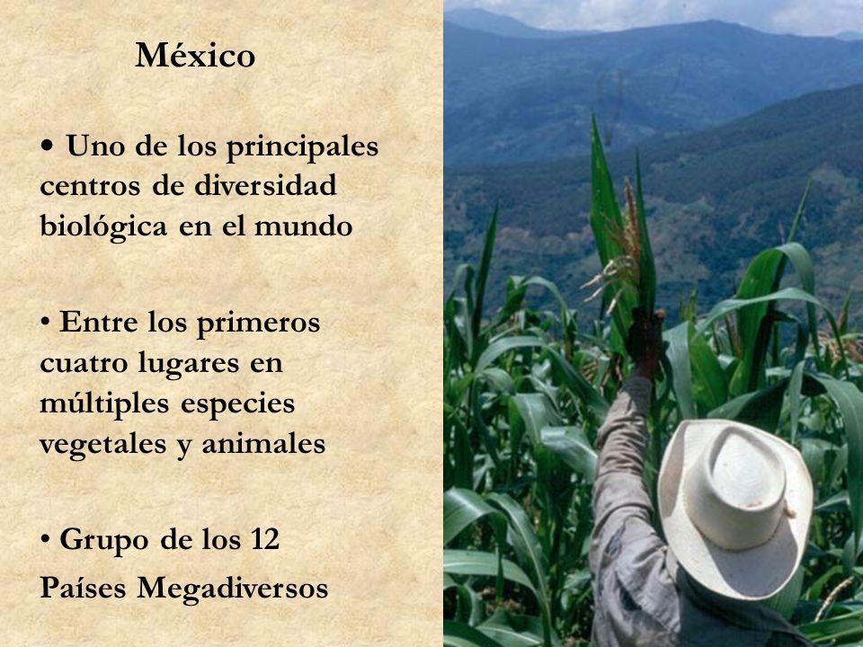 México Uno de los principales centros de diversidad biológica en el mundo.