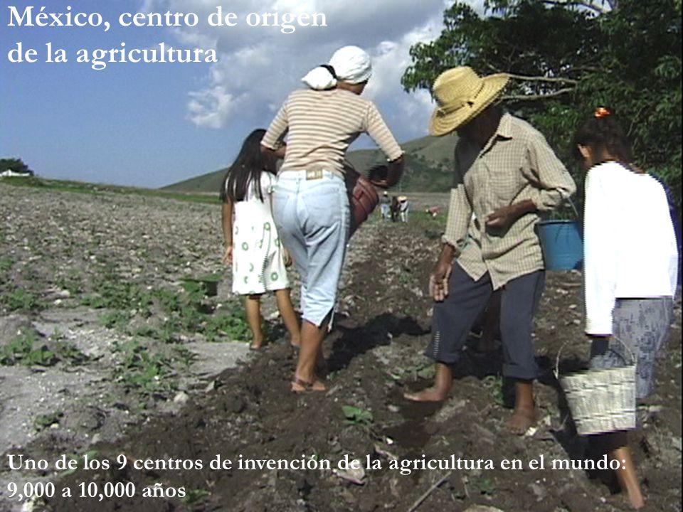México, centro de origen de la agricultura