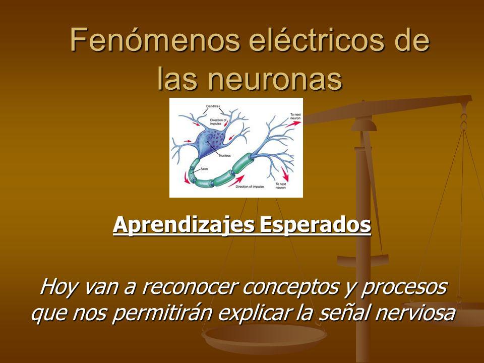 Fenómenos eléctricos de las neuronas