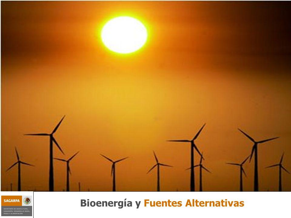 Bioenergía y Fuentes Alternativas