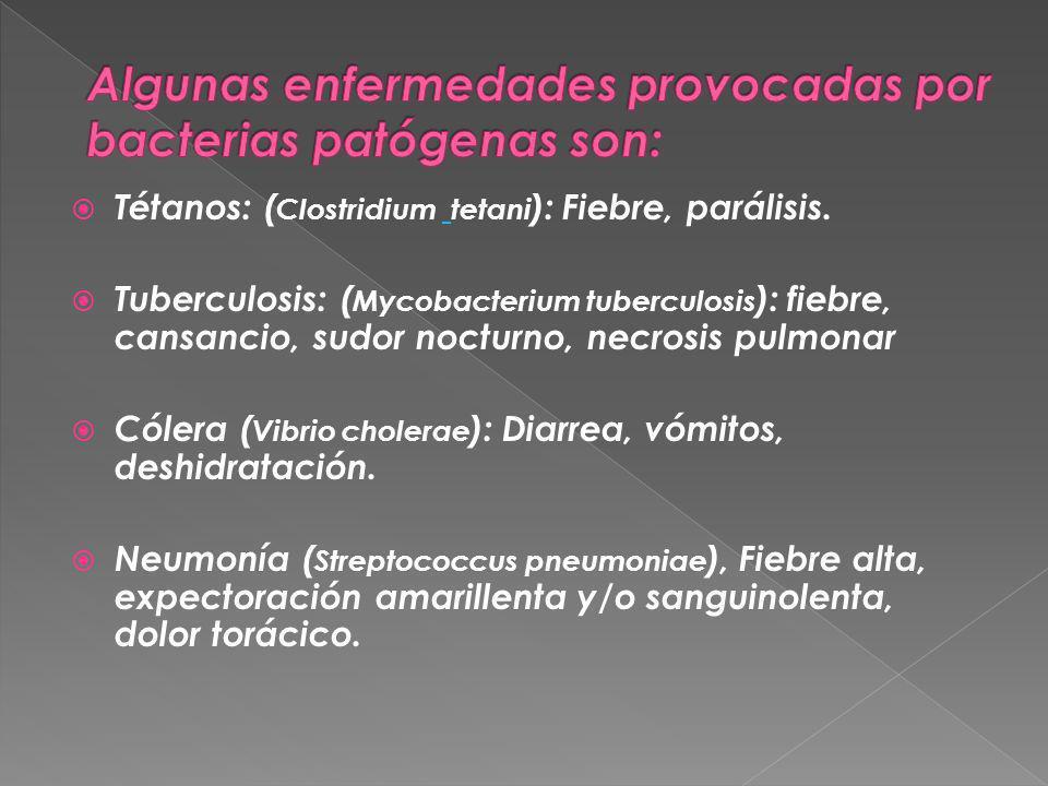 Algunas enfermedades provocadas por bacterias patógenas son:
