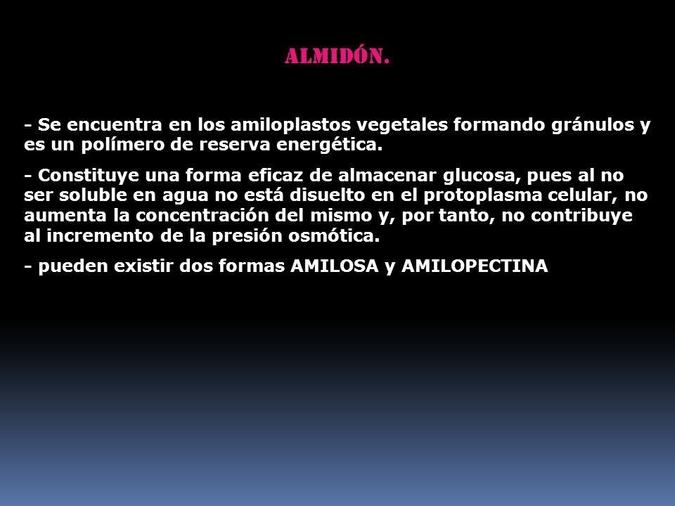 Almidón. - Se encuentra en los amiloplastos vegetales formando gránulos y es un polímero de reserva energética.