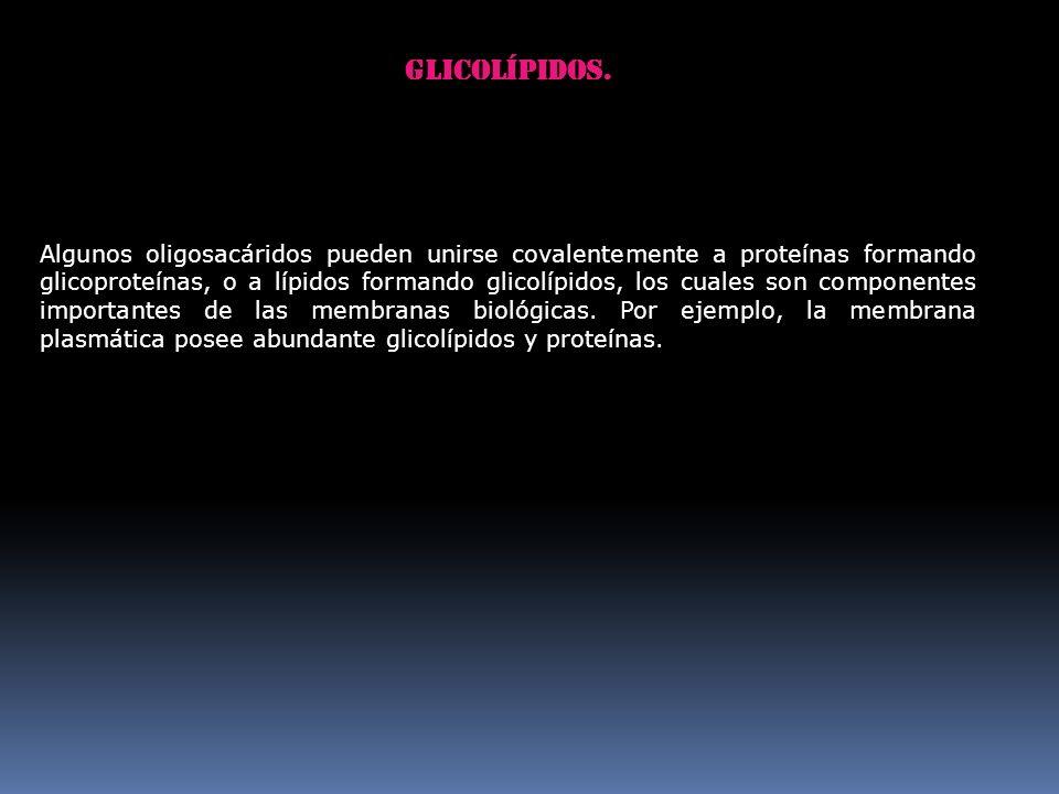 Glicolípidos.