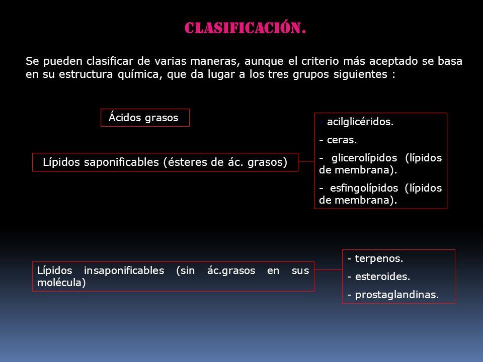 Lípidos saponificables (ésteres de ác. grasos)