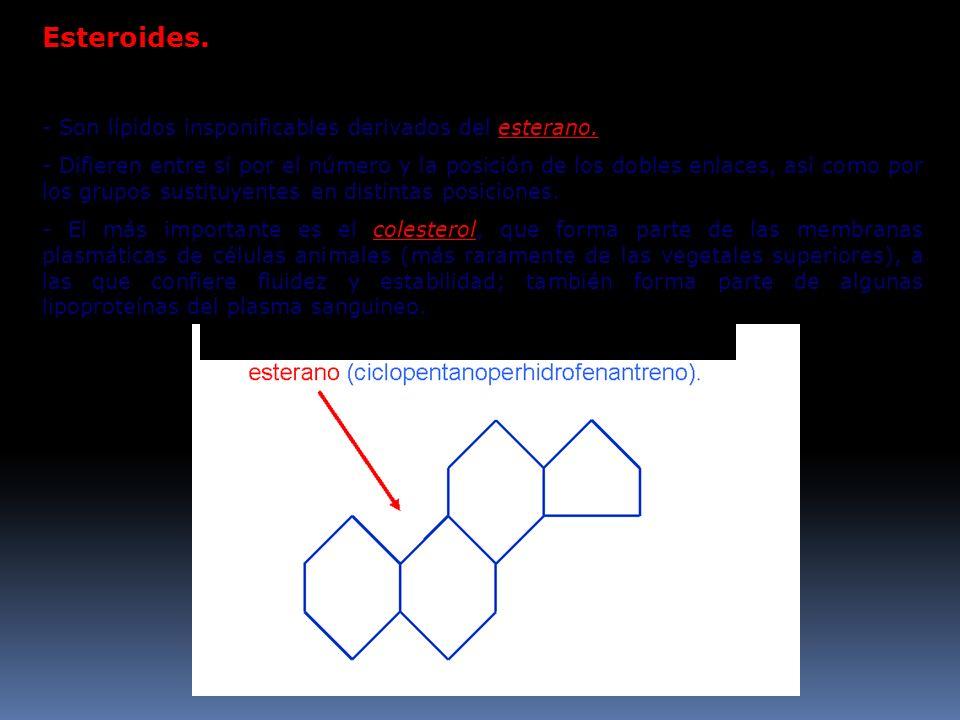 Esteroides. - Son lípidos insponificables derivados del esterano.