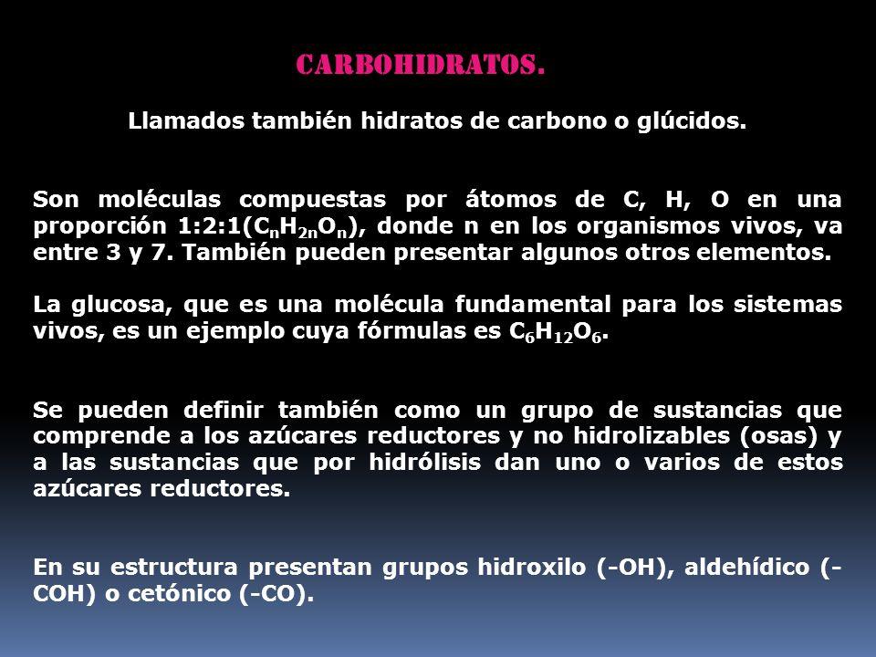Llamados también hidratos de carbono o glúcidos.