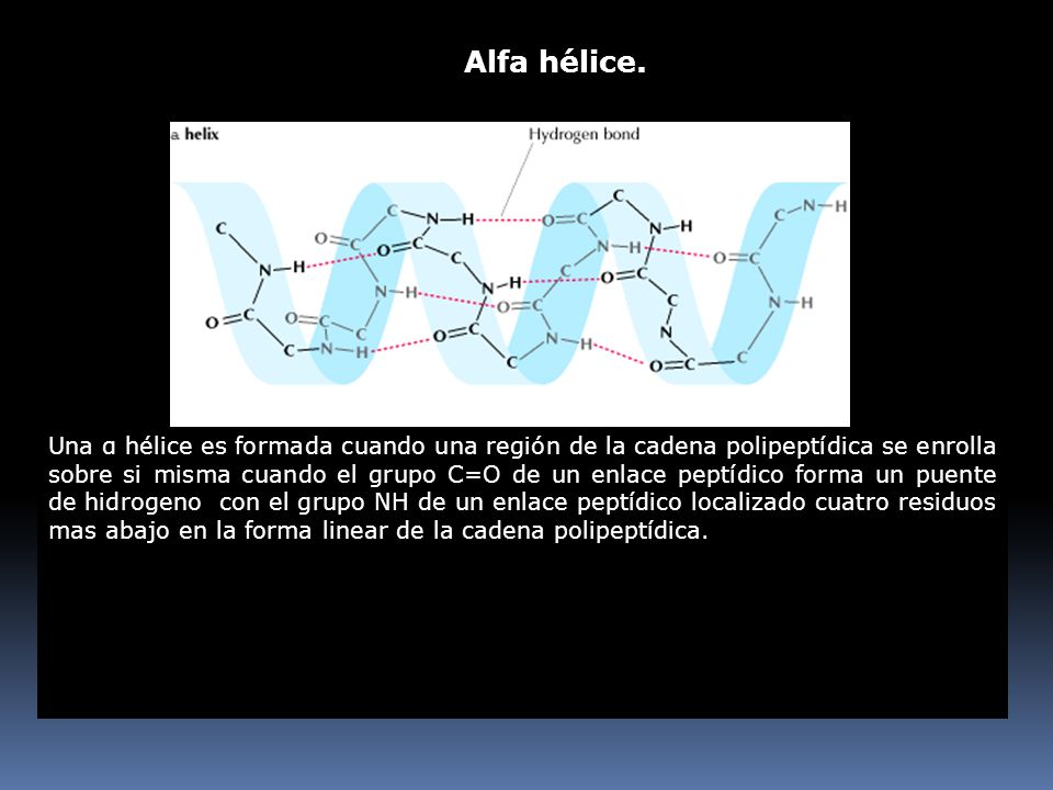 Alfa hélice.