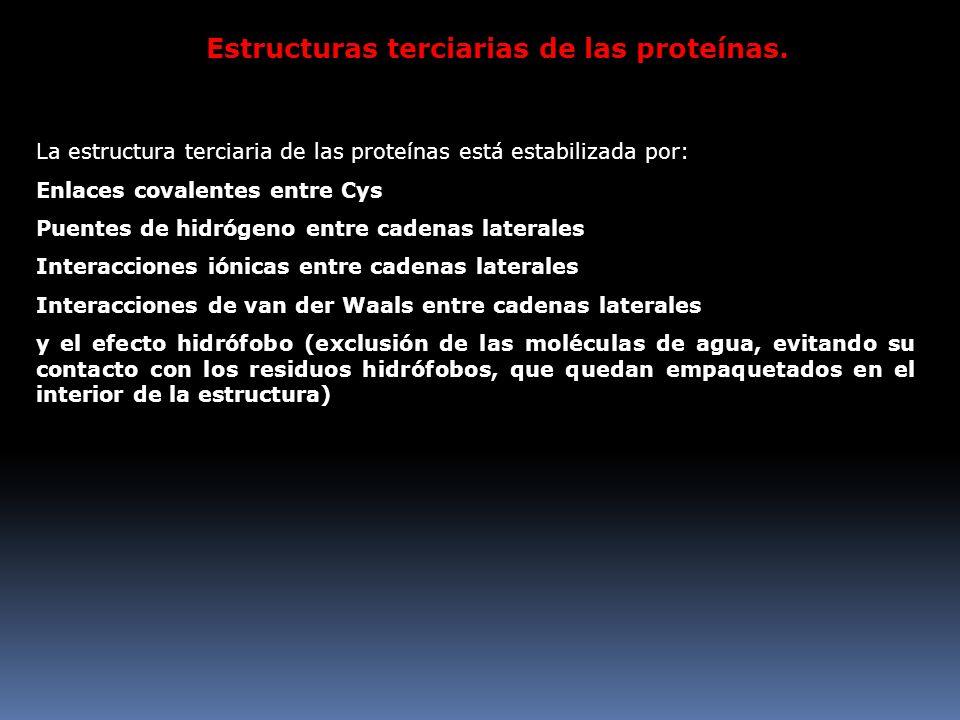 Estructuras terciarias de las proteínas.