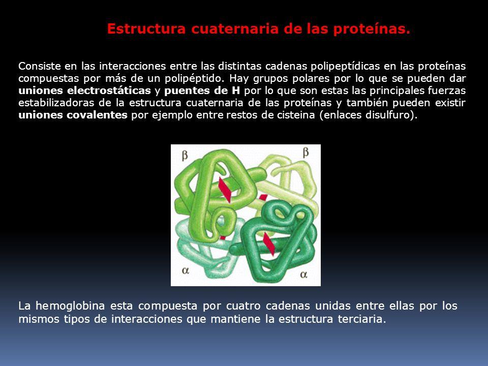 Estructura cuaternaria de las proteínas.