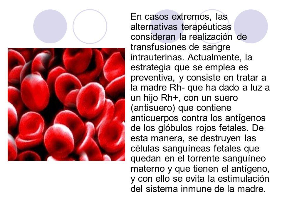 En casos extremos, las alternativas terapéuticas consideran la realización de transfusiones de sangre intrauterinas.