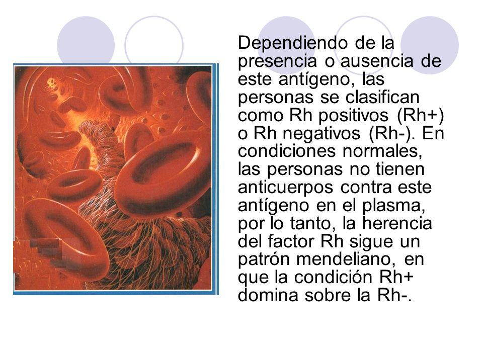 Dependiendo de la presencia o ausencia de este antígeno, las personas se clasifican como Rh positivos (Rh+) o Rh negativos (Rh-).