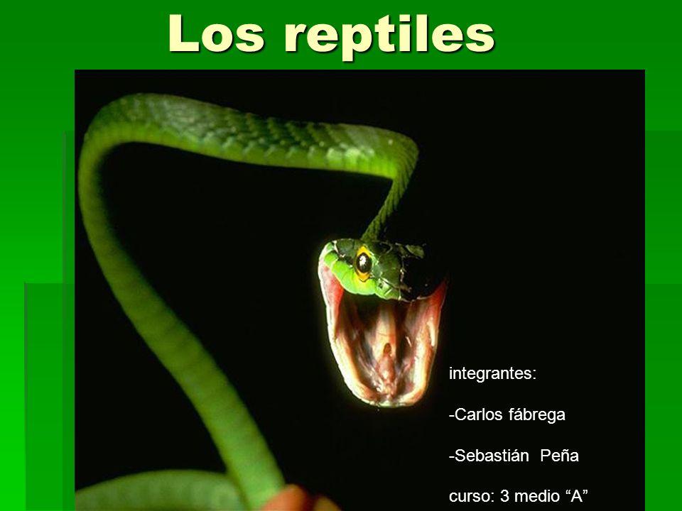 Los reptiles integrantes: -Carlos fábrega -Sebastián Peña