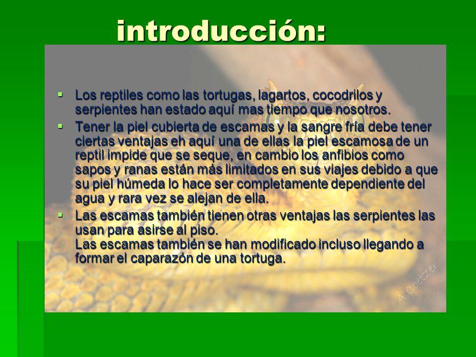 introducción:Los reptiles como las tortugas, lagartos, cocodrilos y serpientes han estado aquí mas tiempo que nosotros.