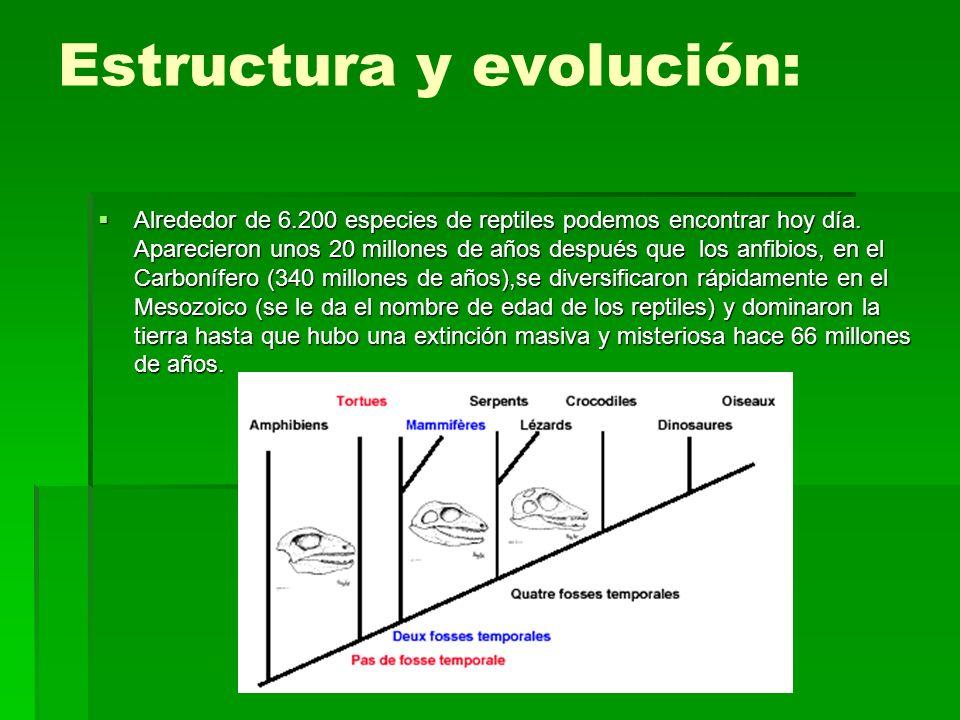 Estructura y evolución: