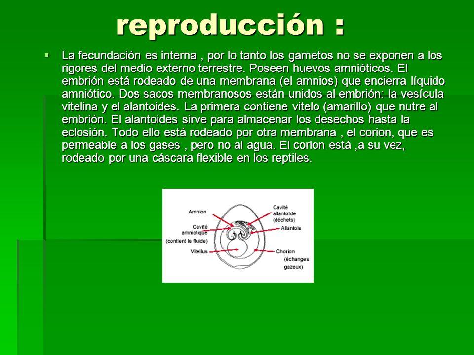 reproducción :