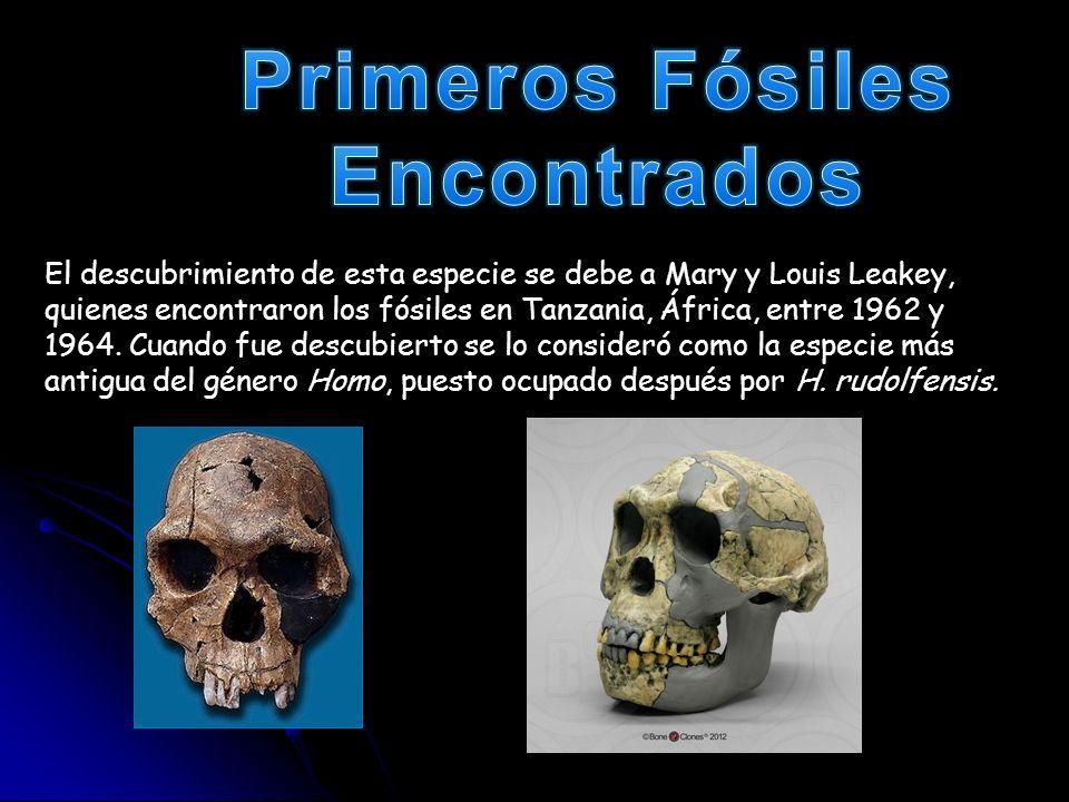 Primeros Fósiles Encontrados