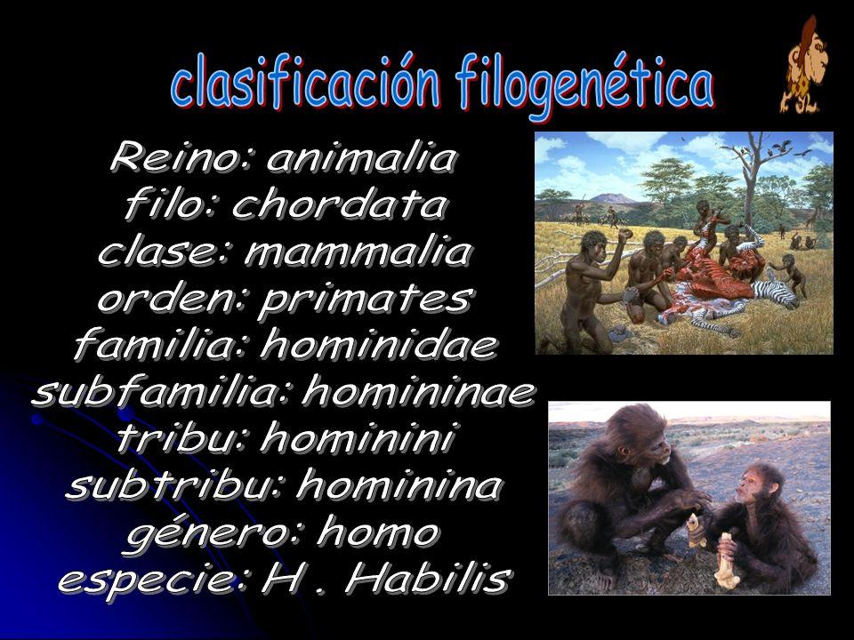 clasificación filogenética
