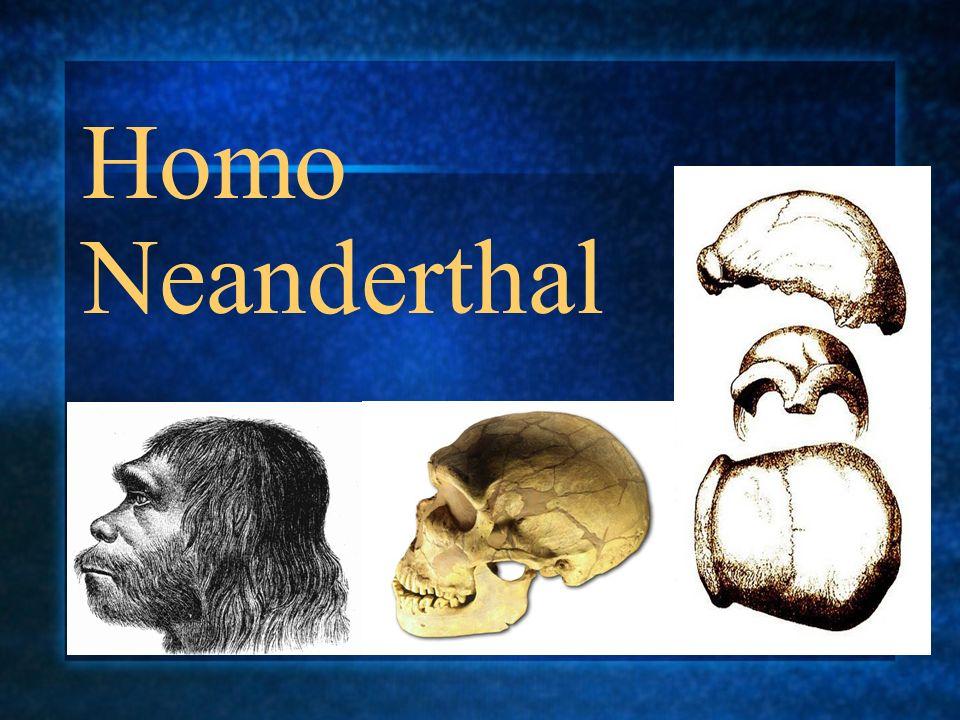 Homo Neanderthal