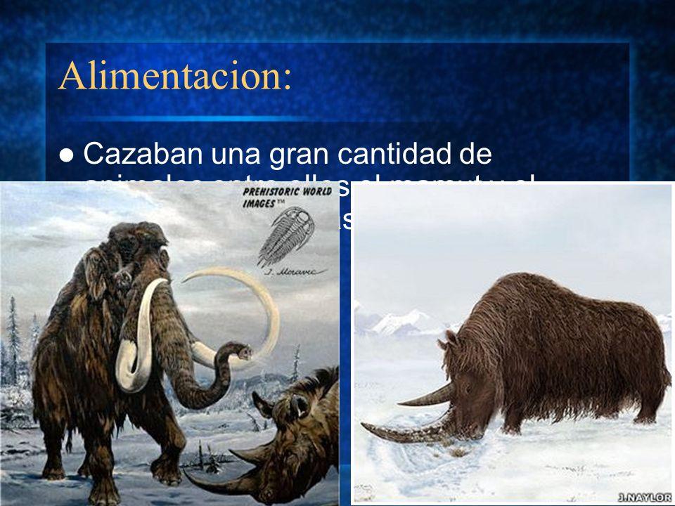 Alimentacion:Cazaban una gran cantidad de animales entre ellos el mamut y el rinoceronte, además de practicar el canibalismo.