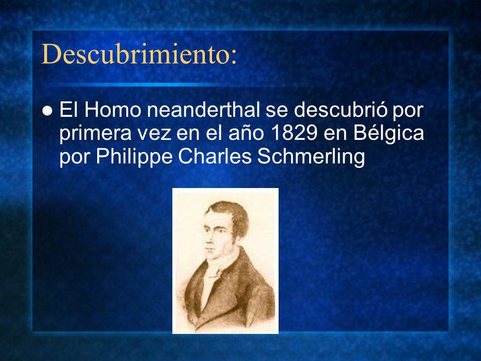 Descubrimiento: El Homo neanderthal se descubrió por primera vez en el año 1829 en Bélgica por Philippe Charles Schmerling.