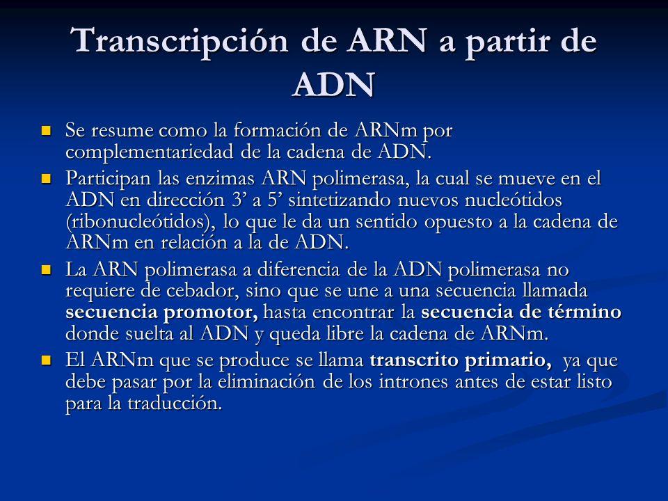 Transcripción de ARN a partir de ADN