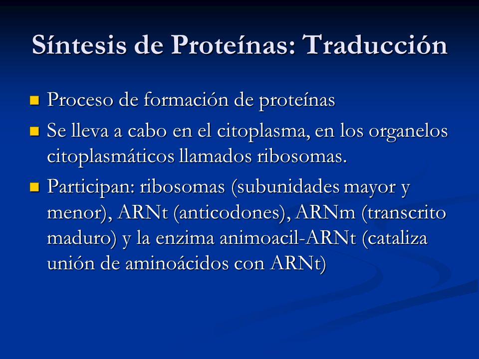Síntesis de Proteínas: Traducción