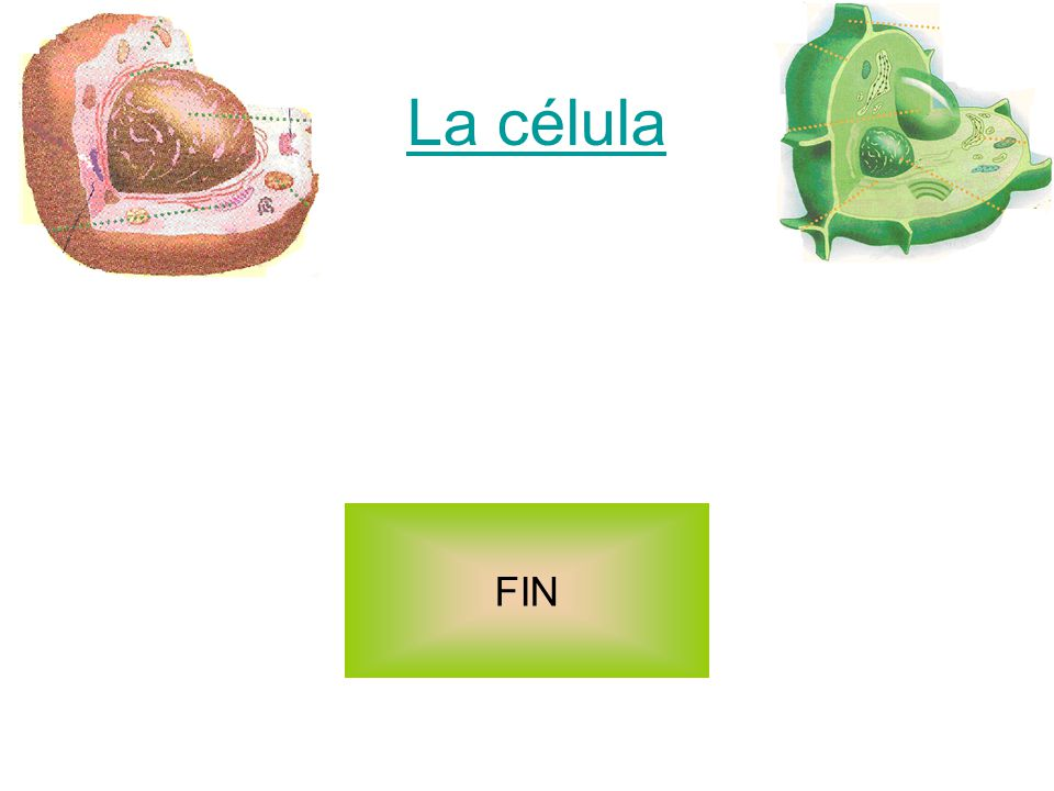 La célula FIN
