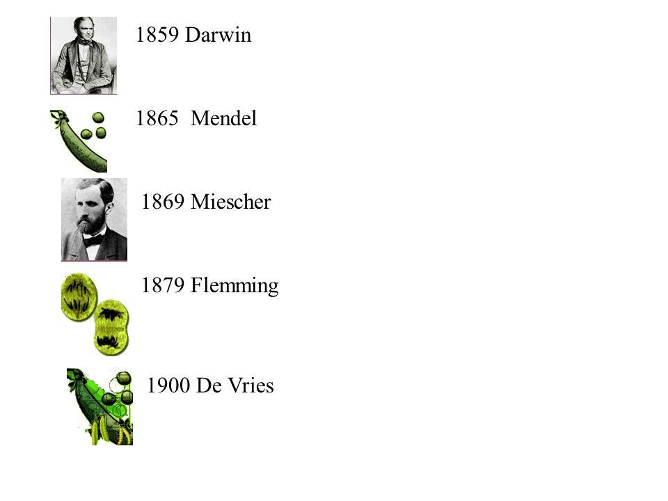 1859 Darwin 1865 Mendel 1869 Miescher 1879 Flemming 1900 De Vries
