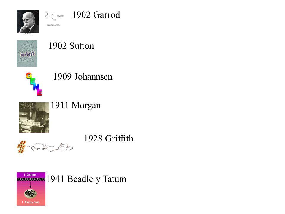 1902 Garrod 1902 Sutton 1909 Johannsen 1911 Morgan 1928 Griffith 1941 Beadle y Tatum