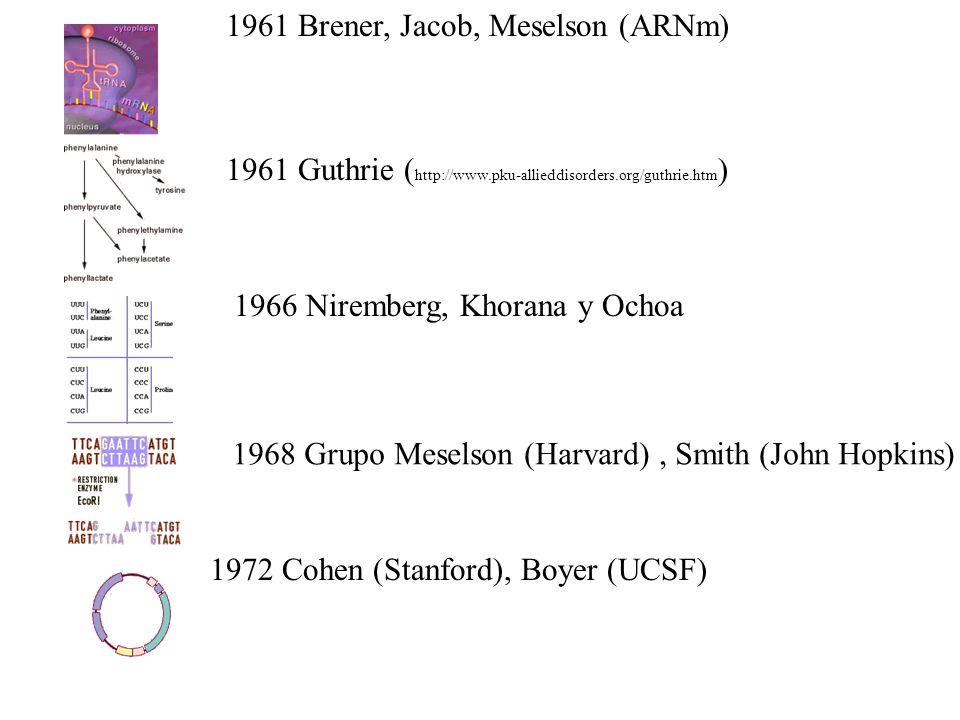 1961 Brener, Jacob, Meselson (ARNm)