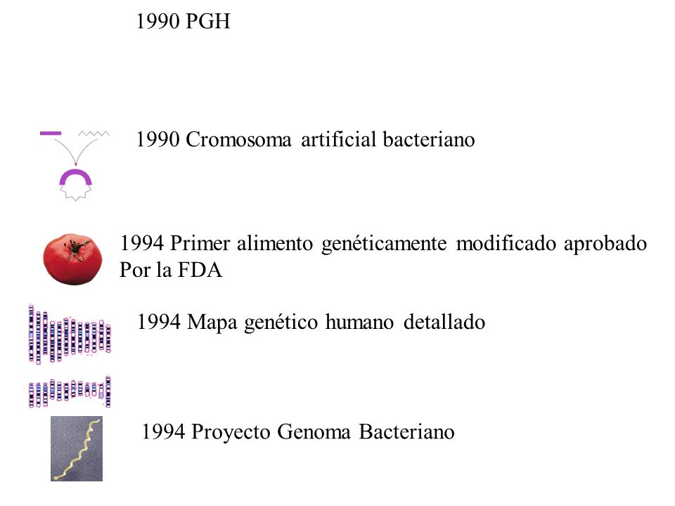 1990 PGH 1990 Cromosoma artificial bacteriano. 1994 Primer alimento genéticamente modificado aprobado.