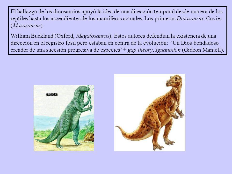 El hallazgo de los dinosaurios apoyó la idea de una dirección temporal desde una era de los reptiles hasta los ascendientes de los mamíferos actuales. Los primeros Dinosauria: Cuvier (Mosasaurus).