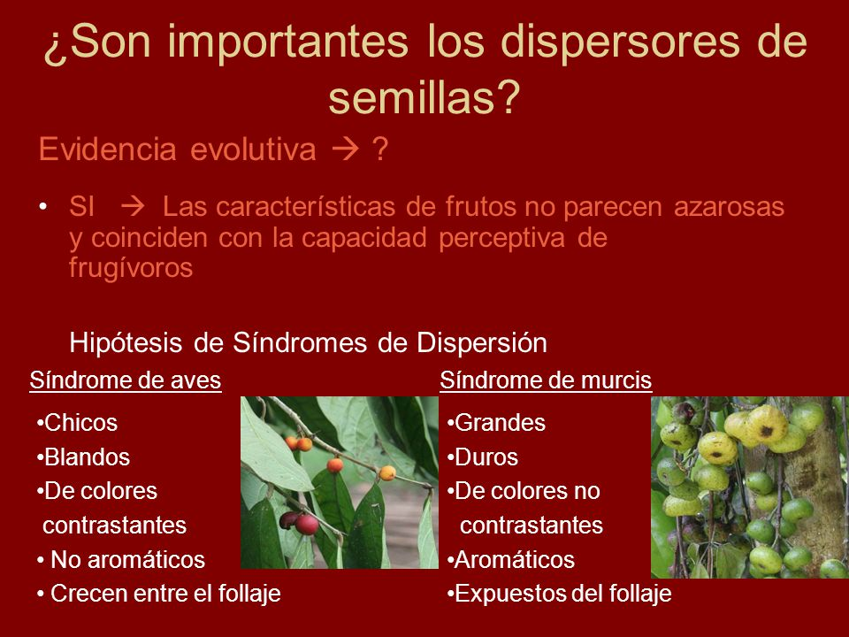 ¿Son importantes los dispersores de semillas